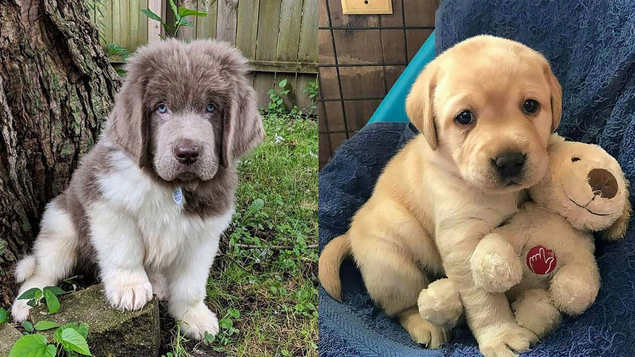 best-family-dog-breeds