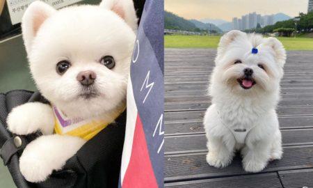 aggressive-behavior-in-dogs