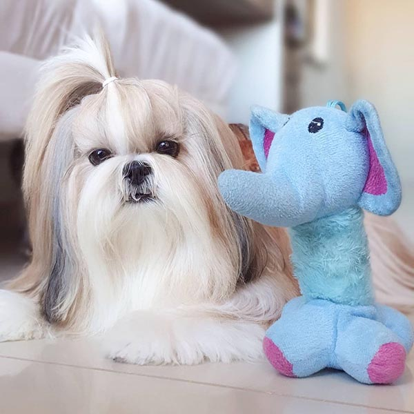 5 Ways to Extend Your Shih Tzus