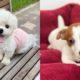 adopt-a-senior-dog