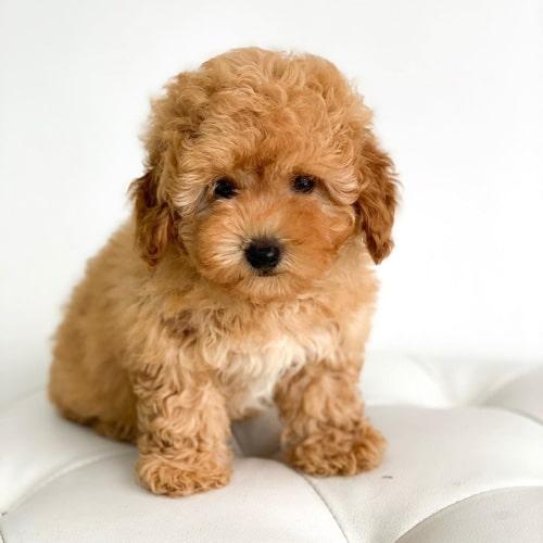 best-9-family-dog-breeds