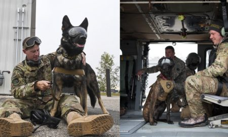 military-dogs