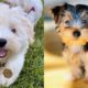 10-most-feminine-dog-breeds-for-women-and-men