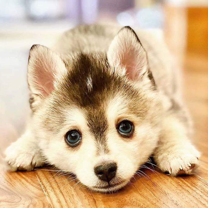 10-most-feminine-dog-breeds-for-women-and-men