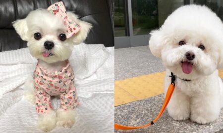 secrets-for-having-a-happy-dog