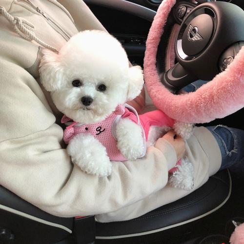 dog-in-a-hot-car